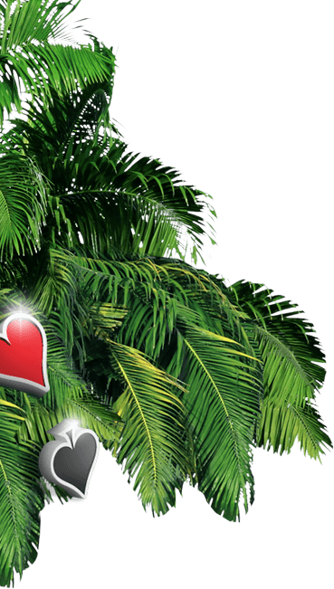 Palm tree background image